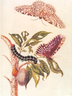 Il Bruco e la Farfalla – Oltre le Crisi Familiari